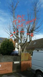 Tree Image Example